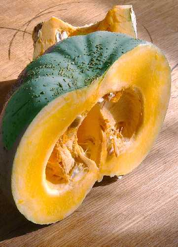 PUMPKIN 'Queensland Blue' - Cucurbita maxima