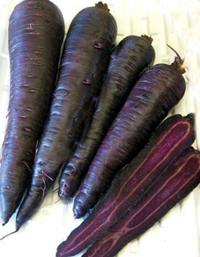 Carrot 'Deep Purple' F1 - Daucus carota var. sativus