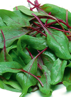 Spinach 'Reddy' F1 - Spinacea oleracea