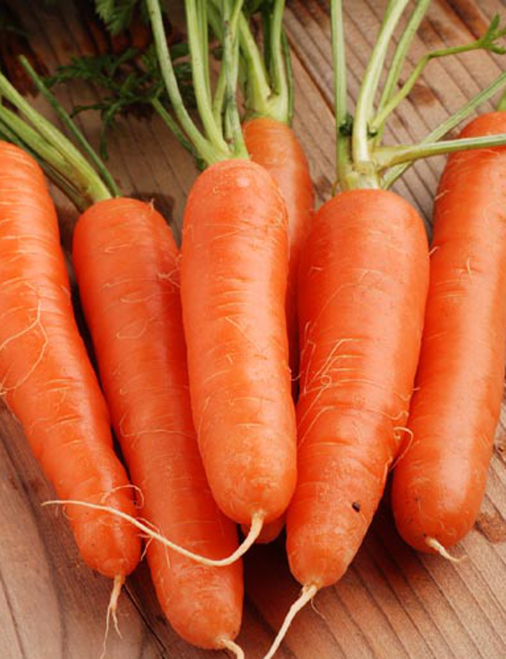 CARROT 'Early Nantes' - Daucas carota ssp. sativus