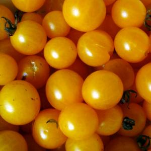 TOMATO 'Broad Ripple Currant' - Lycopersicon esculentum