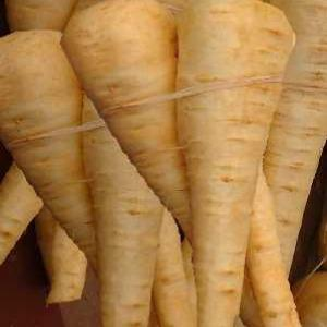 PARSNIP `Hollow Crown` - Pastinaca sativa
