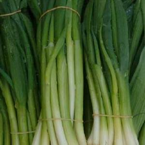 Spring Onion, Classic Bunching - Allium fistulosum