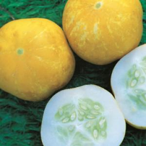 CUCUMBER 'Crystal Lemon'  - Cucumis sativas
