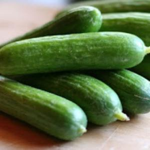 Cucumber 'Mid East Peace' - Cucumis sativas