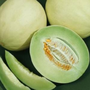 Melon 'Honey Dew Green' - Cucumis melo