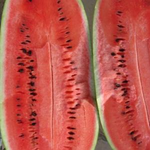Watermelon 'Charleston Grey' - Cucumis melo