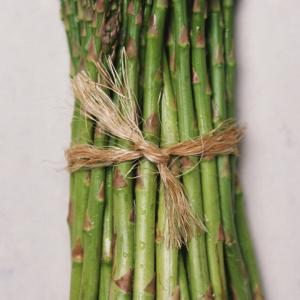 ASPARAGUS 'Jersey Knight F1 - Asparagus officinalis