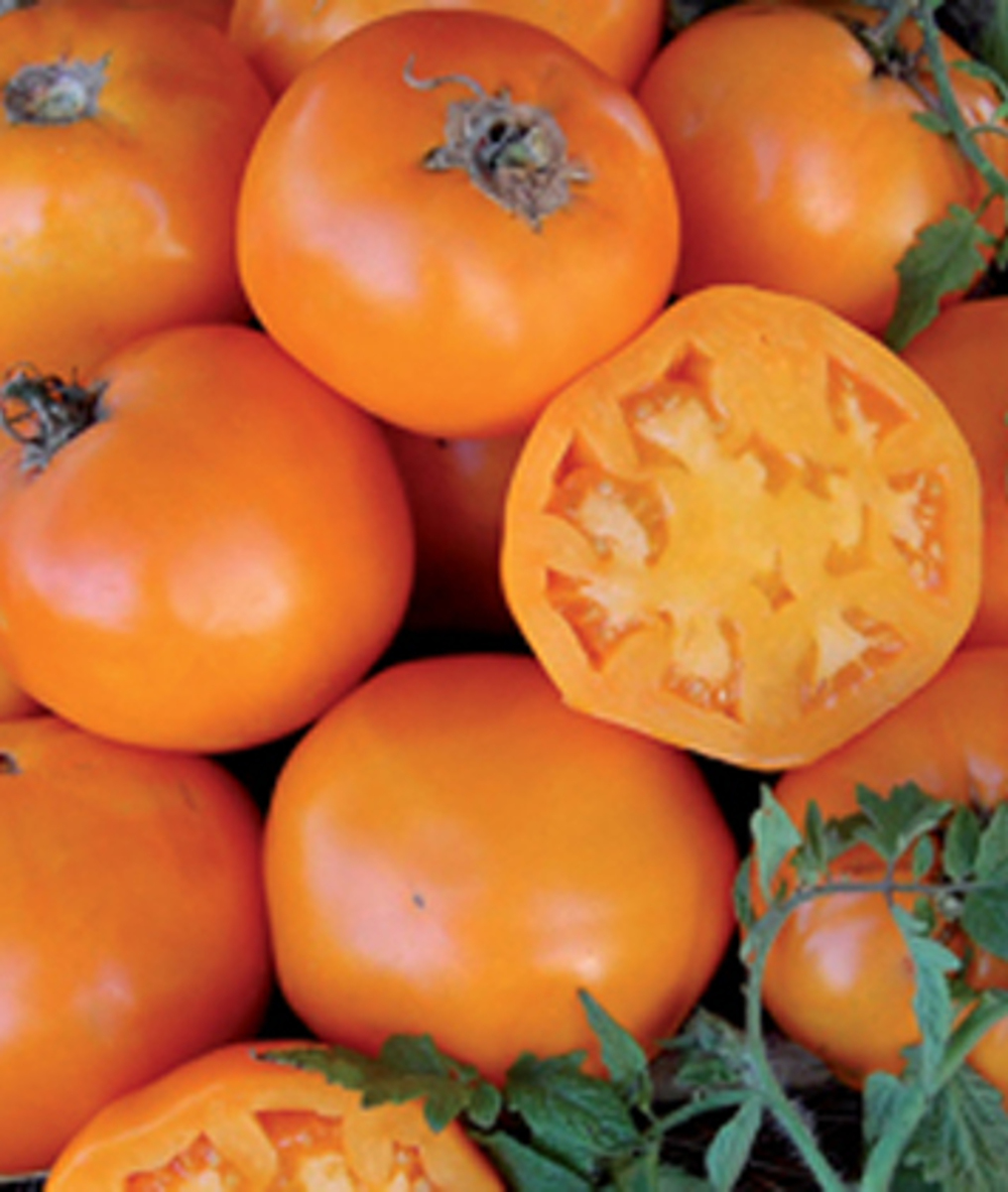 Tomato 'Nebraska Wedding' - Lycopersicon esculentum